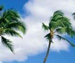 palm trees against a blue sky with fluffy clouds