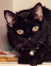 A black cat named Mancini at age 17 .