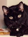 A black cat named Mancini at age 17 .
